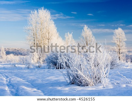 Winter landscape with hoarfrost on trees - stock photo