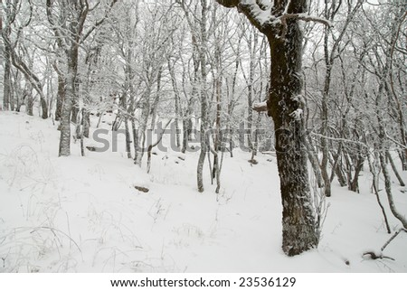 Winter landscape with icy trees.
