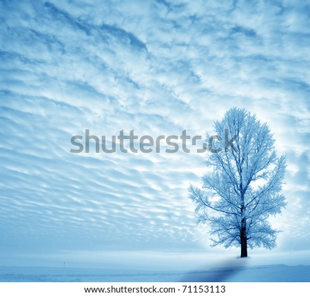 Winter landscape with lonely tree - stock photo