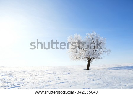 Winter landscape with lonely tree and snow field. Alone frozen tree in winter snowy field. Frosty winter day - snowy branch. - stock photo