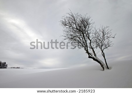 Winter landscape with one tree and a forest