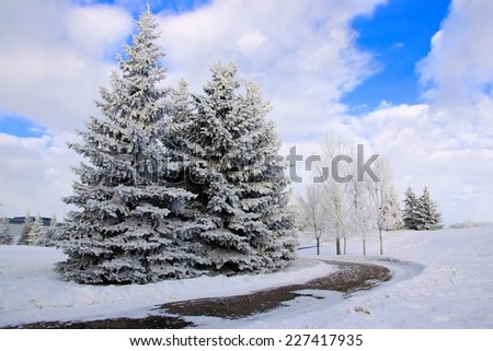 Winter landscape with path through snow covered park and frosty trees - stock photo