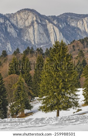 Winter landscape with Postavaru mountains ridge and mixed forest in the morning light, Brasov county, Romania. - stock photo