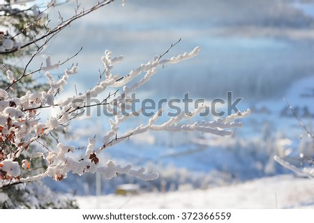 Winter landscape with snow cover trees, blue haze and snow capped mountains in background. last year's leaves red or brown can be seen through  snow on  tree. Sunny frosty morning in Carpathians. - stock photo