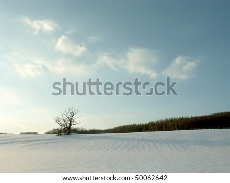 Winter landscape with snow covered field on the background of blue sky and clouds. - stock photo