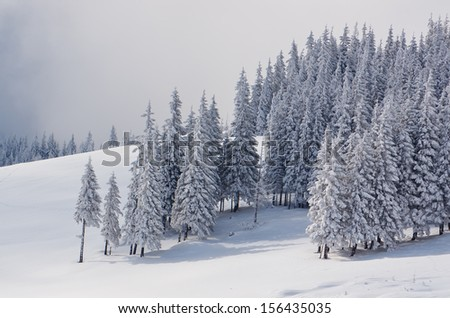 Winter landscape with snow-covered fir trees in the mountains - stock photo