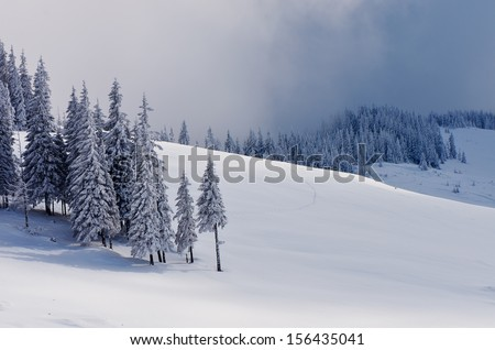 Winter landscape with snow-covered fir trees in the mountains