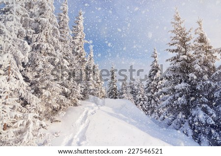 Winter landscape with snow drifts and a footpath in a mountain forest. Forest after a snow storm - stock photo