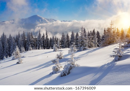 Winter landscape with snow drifts in a mountain forest