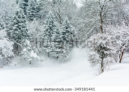 Winter landscape with snow on trees and floor. - stock photo