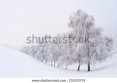 Winter landscape with snowy trees - stock photo