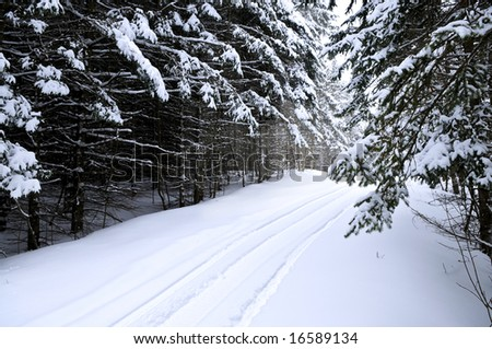 Winter landscape with snowy trees and snowmobile path - stock photo