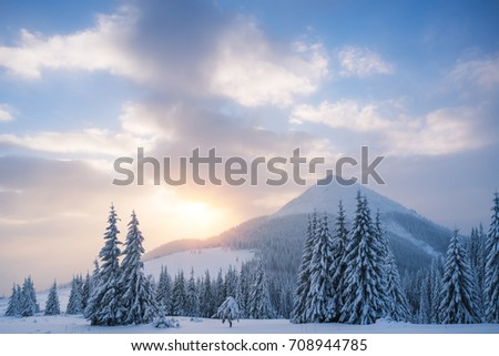 Winter landscape with spruce forest in the mountains. Sunrise with beautiful clouds. The top and the field. Carpathians, Ukraine, Europe