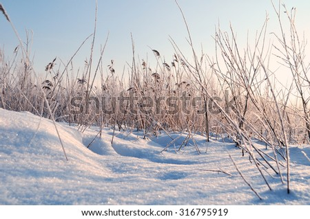 Winter landscape with the snowy field and frozen plants at the sunset  - stock photo
