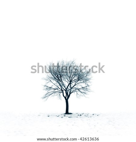 Winter landscape with tree on a snow covered field - stock photo