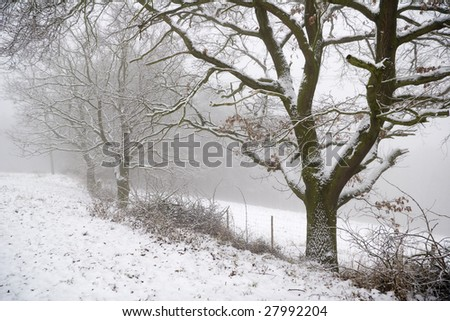 winter landscape with trees and fog