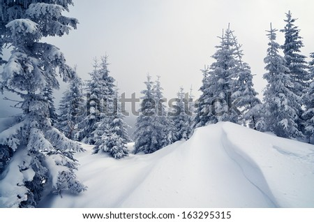 Winter landscape with trees covered with snow in a mountain valley - stock photo