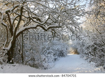 winter landscape with trees covered with snowflakes - stock photo