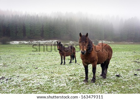 winter landscape with two horses looking and fog