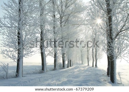 Winter lane among frosted trees in the morning. Photo taken in December. - stock photo