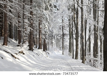 Winter lane among frosted trees lit by the morning sun. - stock photo