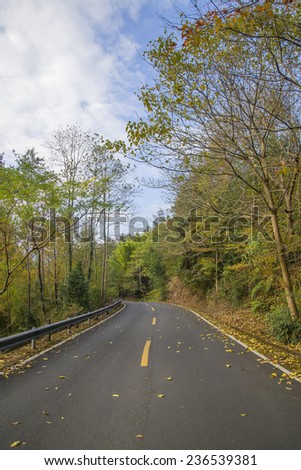 Winter leaves road