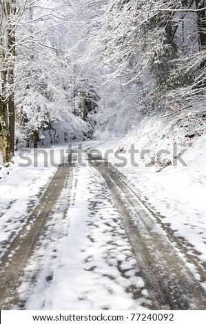 Winter, Monongahela National Forest, Forest Service Road 76 along Cranberry River, West Virginia, USA - stock photo