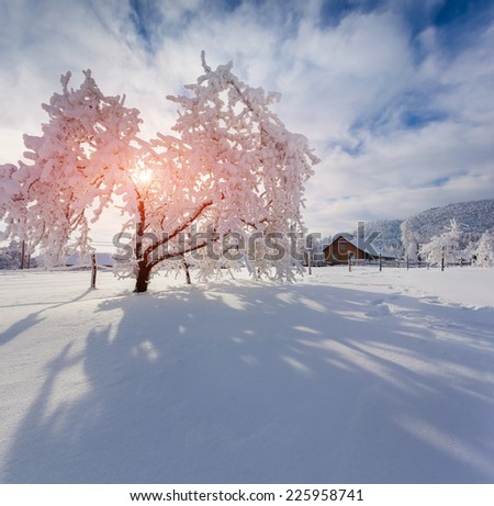 Winter morning in the Carpathian village. Sunny winter morning.  - stock photo