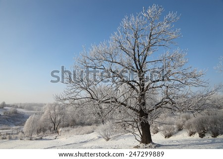 Winter morning landscape panorama with tree covered hoarfrost and snow at very cold weather.  Beautiful Christmas card. - stock photo