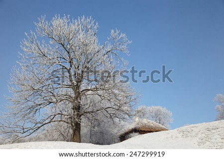 Winter morning landscape with tree covered hoarfrost and snow, very cold.  Beautiful Christmas background.  - stock photo