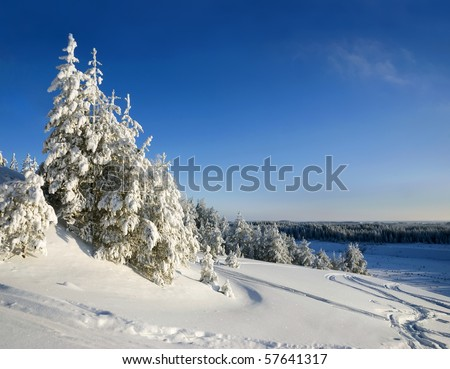 Winter mountain landscape with Christmas frozen trees - stock photo