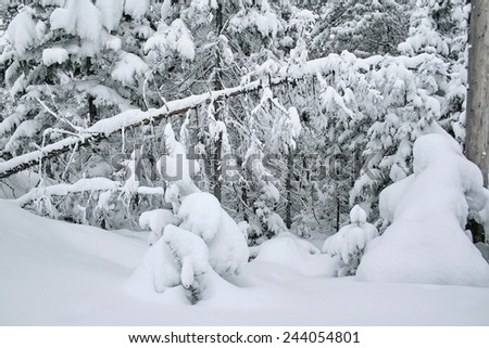 Winter mountain landscape with fir forest covered with snow. Mountain of Lake Baikal. Baykalsk, Irkutsk region, Siberia, Russia. - stock photo
