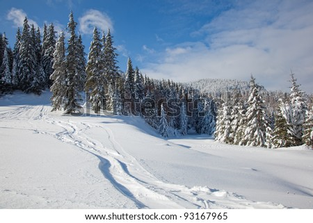 Winter mountain landscape with frozen trees - stock photo