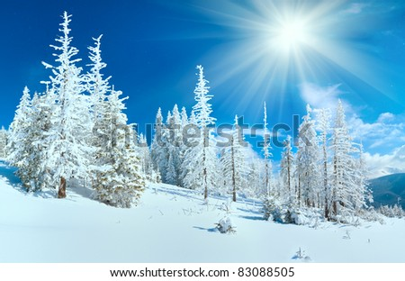 Winter mountain panorama with fir forest on mountainside (Carpathian Mountains, Ukraine). - stock photo