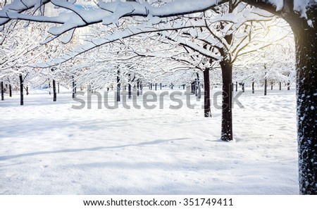 Winter mountain scenery snowy tree rows park with snowy trees - stock photo