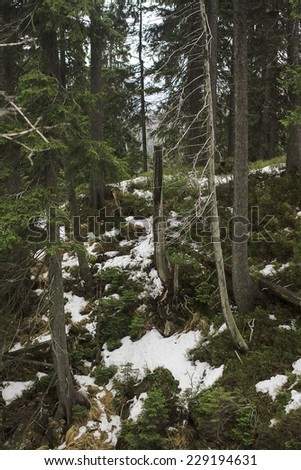 Winter Mystical Forest - stock photo