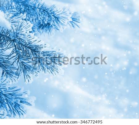Winter natural background with pine branches in the frost - stock photo