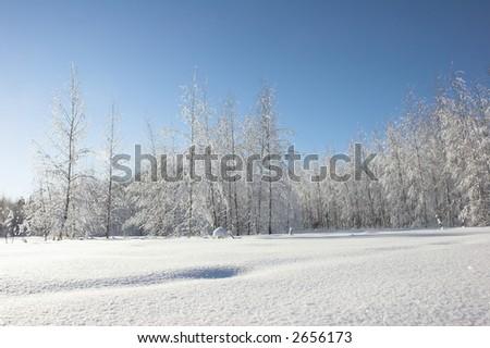 winter nature - stock photo