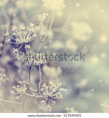 winter nature background - stock photo