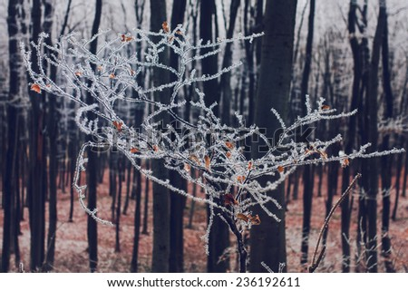 Winter nature background. Frozen branch with hoar-frost, soft focus. Creative toning effect - stock photo