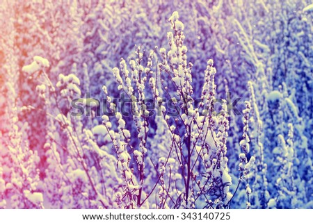 Winter nature background. Winter flower snow frost ice field - stock photo