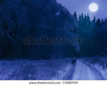 Winter night in the forest (with a lonely wolf on the road and moon in the sky) - stock photo