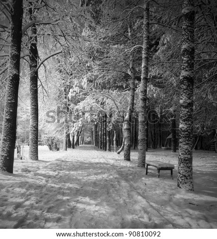 winter night landscape with dark snowy trees Park scene. Night shot. - stock photo