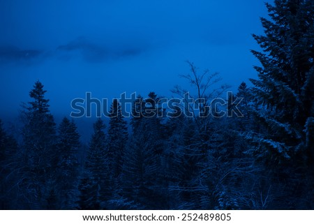 Winter night  with trees in snow and mountains in fog  - stock photo