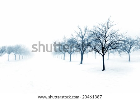 Winter orchard covered with snow - stock photo