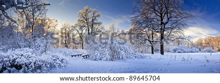 Winter panorama of a park under snow at sunny day - stock photo