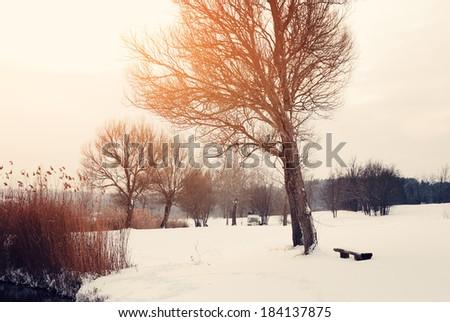 Winter park - stock photo