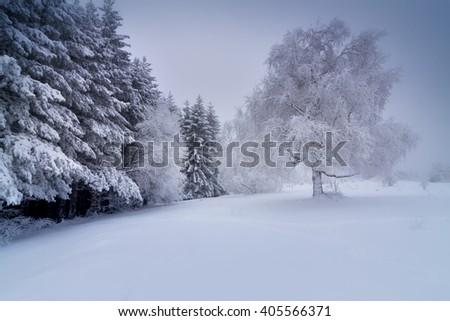 Winter park in snow  - stock photo