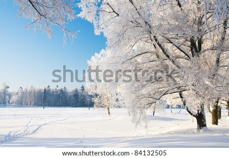 Winter park in snow - stock photo