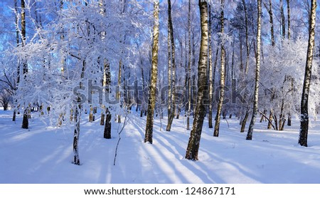 Winter park in snow and frost on a sunny day - stock photo